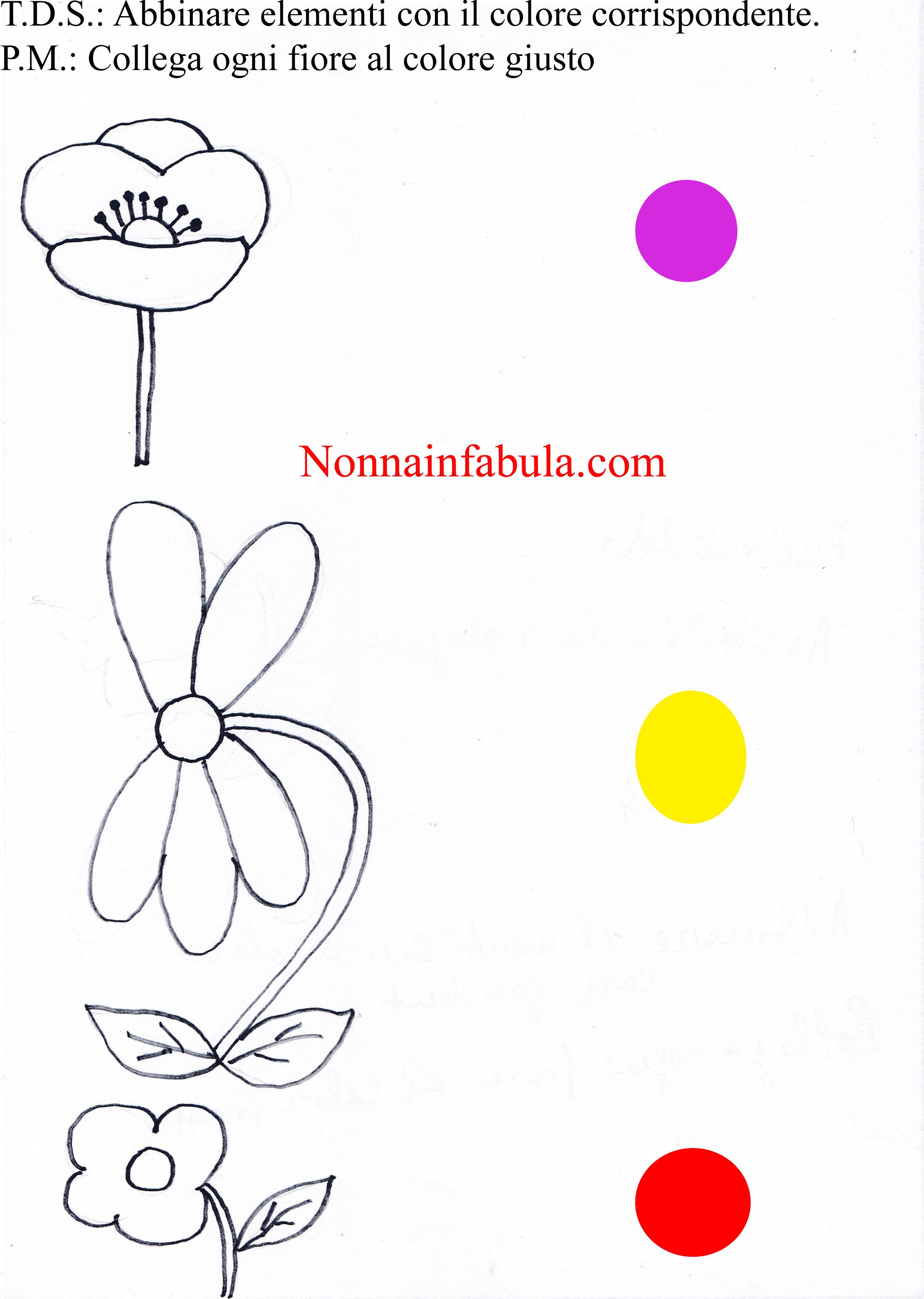 colori e fiori