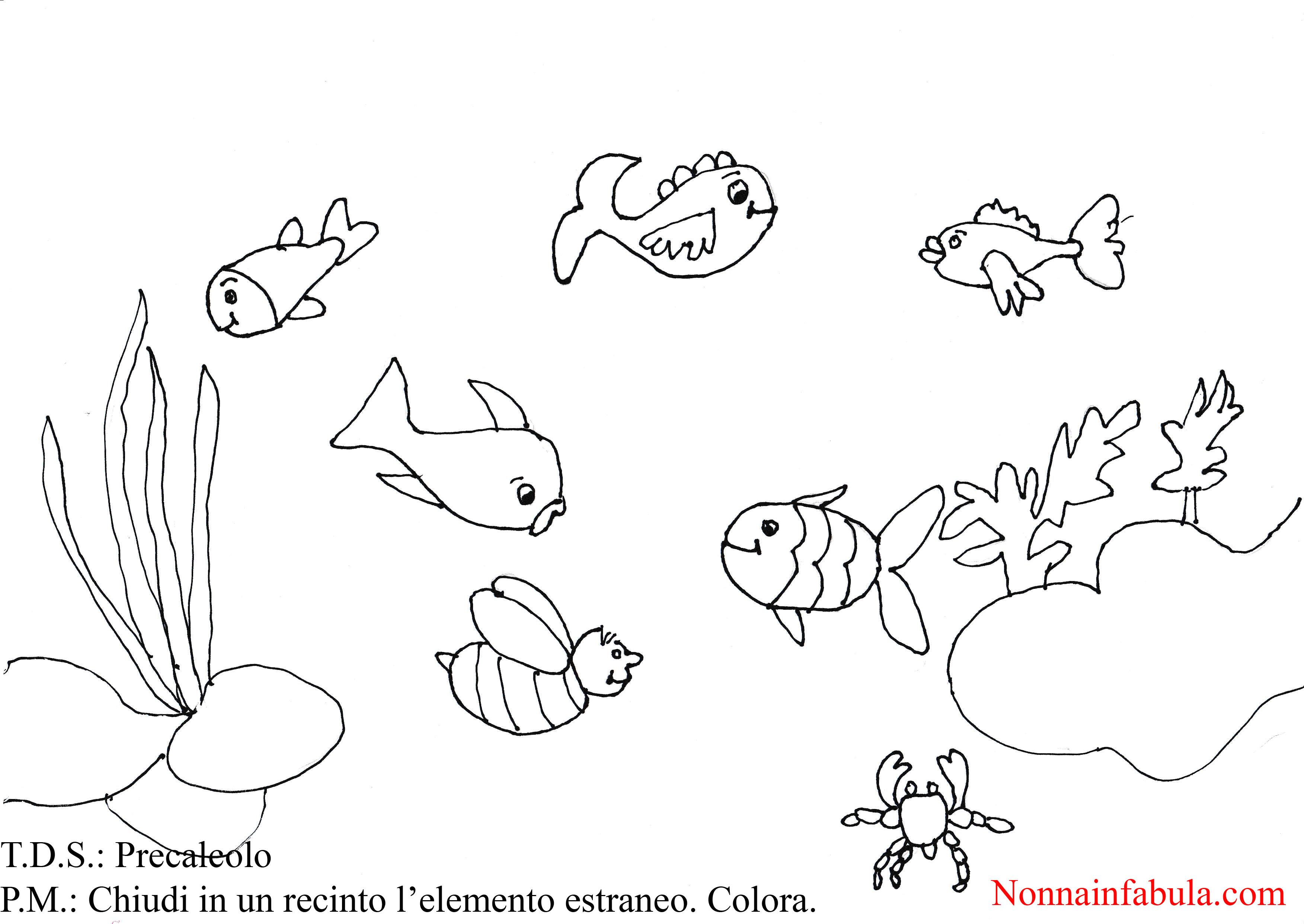 Progetto il fondale marino nonna in fabula for Disegni pesciolino arcobaleno